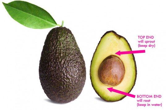 Blending The Avocado Seed…Seriously?